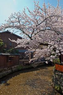 祇園白川の桜の写真素材 [FYI00422600]