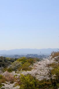 清水寺 錦雲渓の桜の写真素材 [FYI00422616]