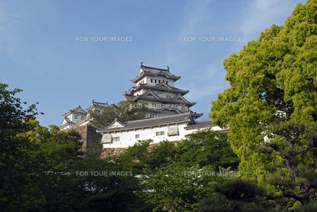 姫路城の写真素材 [FYI00422701]
