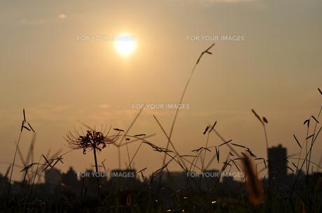 秋の日暮れの写真素材 [FYI00422754]