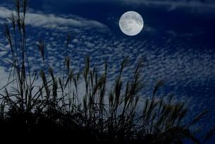 月明かりにススキの写真素材 [FYI00422816]