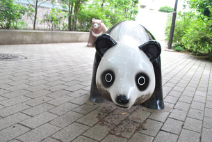 公園のパンダの写真素材 [FYI00423048]