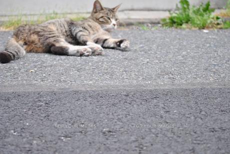 猫の写真素材 [FYI00423055]