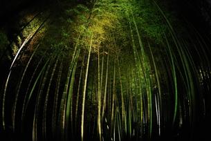 竹林のライトアップの写真素材 [FYI00423260]
