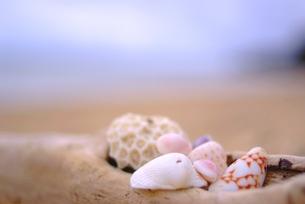 海辺の貝殻の写真素材 [FYI00423431]