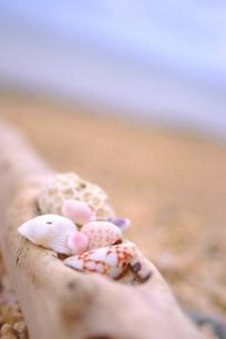 海辺の貝殻の写真素材 [FYI00423435]