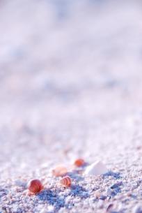 浜辺の小さな貝殻の写真素材 [FYI00423439]