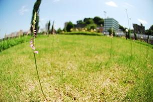 ねじり花の写真素材 [FYI00423446]