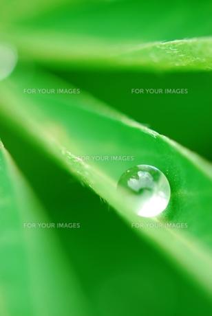緑の葉の上の水滴 の素材 [FYI00423595]