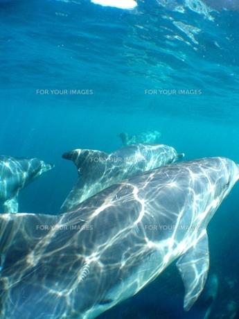 イルカの写真素材 [FYI00423620]