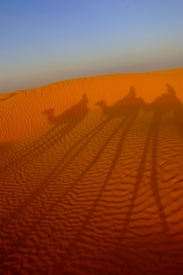砂漠とラクダのシルエットの素材 [FYI00423641]