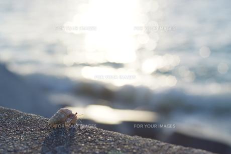 防波堤の上のやどかりの写真素材 [FYI00423689]