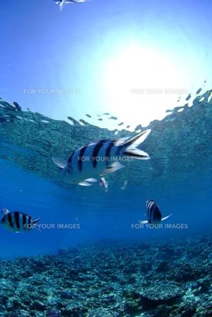 浅瀬の魚の群れの素材 [FYI00423724]