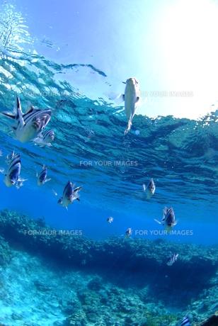 浅瀬の魚の群れの素材 [FYI00423737]