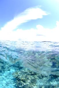 南国の半水面の写真素材 [FYI00423746]