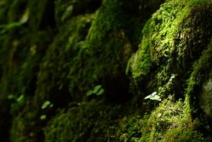 小さな木の芽の素材 [FYI00423785]