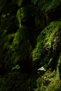 小さな木の芽の素材 [FYI00423789]