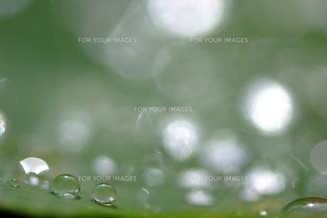 葉の上の水滴の素材 [FYI00423971]