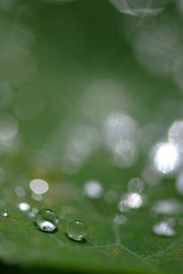 葉の上の水滴の素材 [FYI00423981]
