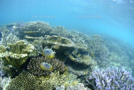 浅瀬の珊瑚礁の素材 [FYI00424035]