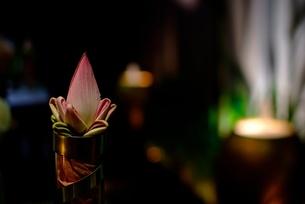 レストランのテーブルの蓮のつぼみの写真素材 [FYI00424175]