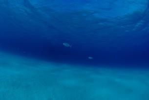 海底の白い砂地の素材 [FYI00424335]
