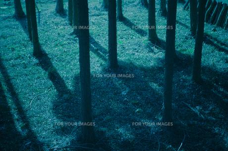 森に差す光の素材 [FYI00424479]