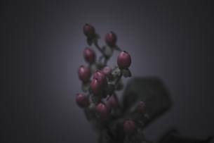 赤い実の素材 [FYI00424482]