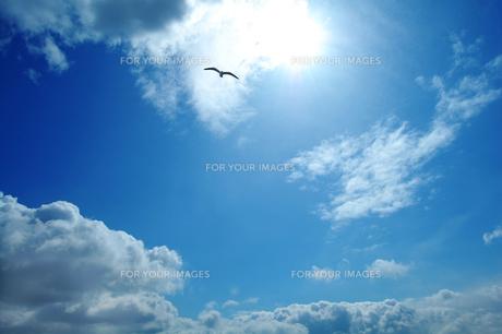 太陽と空と雲と鳥の写真素材 [FYI00424711]