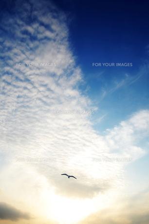 太陽と空と鳥といわし雲の写真素材 [FYI00424716]
