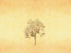 桜の写真素材 [FYI00424926]
