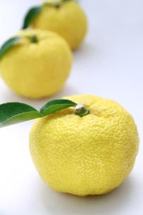 柚子の写真素材 [FYI00425071]
