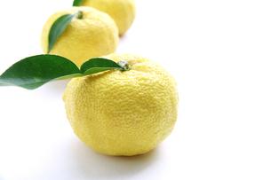 柚子の写真素材 [FYI00425074]