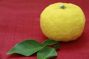 柚子の写真素材 [FYI00425081]