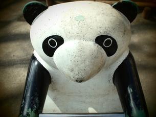 パンダの写真素材 [FYI00425084]