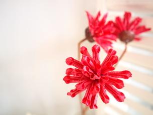 赤い花の写真素材 [FYI00425112]
