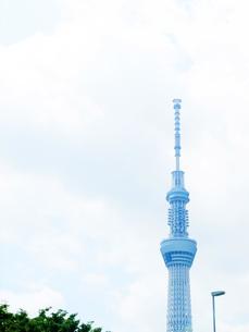 東京スカイツリーの写真素材 [FYI00425480]