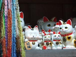 招き猫の写真素材 [FYI00425564]