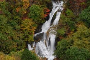 霧降の滝の写真素材 [FYI00425611]