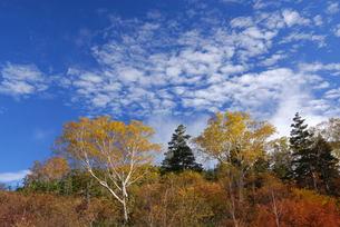 栂池自然園の写真素材 [FYI00425628]