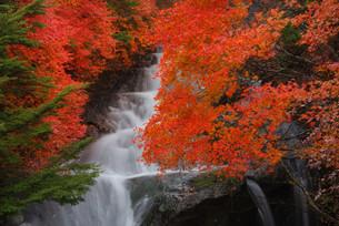 竜頭の滝の写真素材 [FYI00425663]
