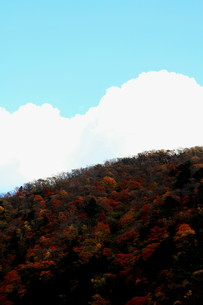空と雲と紅葉の写真素材 [FYI00425684]