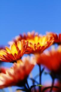 空と花の素材 [FYI00425720]