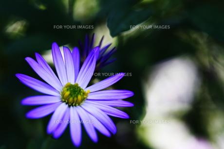 秋の花の素材 [FYI00425743]