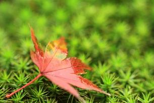秋の忘れ物の写真素材 [FYI00425744]