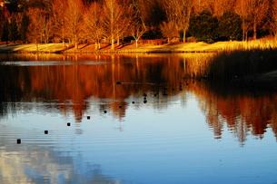 池の畔の写真素材 [FYI00425796]