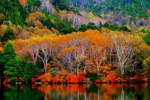 湯の湖、秋の風景の写真素材 [FYI00425804]