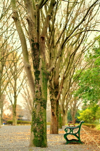 公園のベンチの写真素材 [FYI00425870]