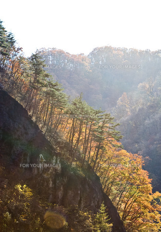 紅葉の崖の素材 [FYI00425885]