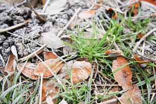 霜の写真素材 [FYI00425965]